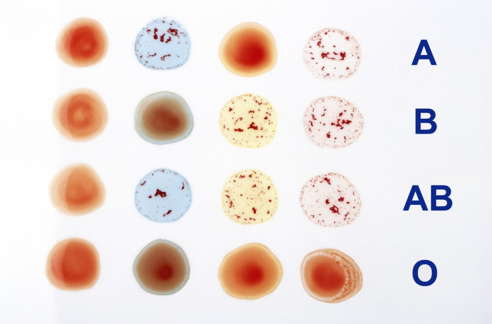 American Red Cross introduces blood typing to Human Anatomy and