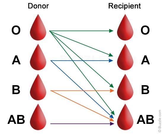 introduction to blood groups Enter your mobile number or email address below and we'll send you a link to download the free kindle app then you can start reading kindle books on your smartphone, tablet, or computer - no kindle device required.