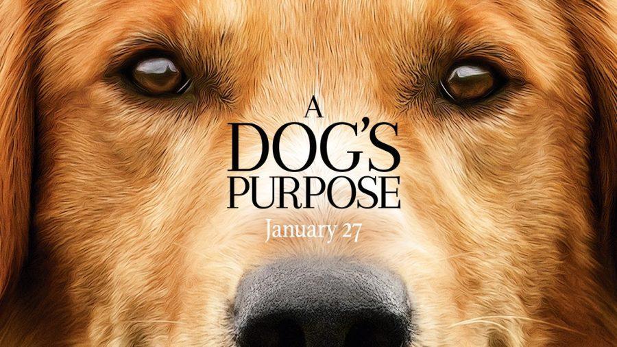 A+Dog%27s+Purpose+is+a+new+fan+favorite