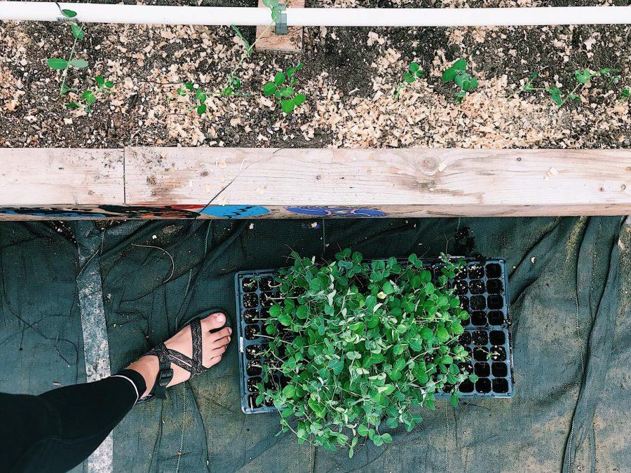 Greenhouse+Week+3+%28Sept.+17-21%29