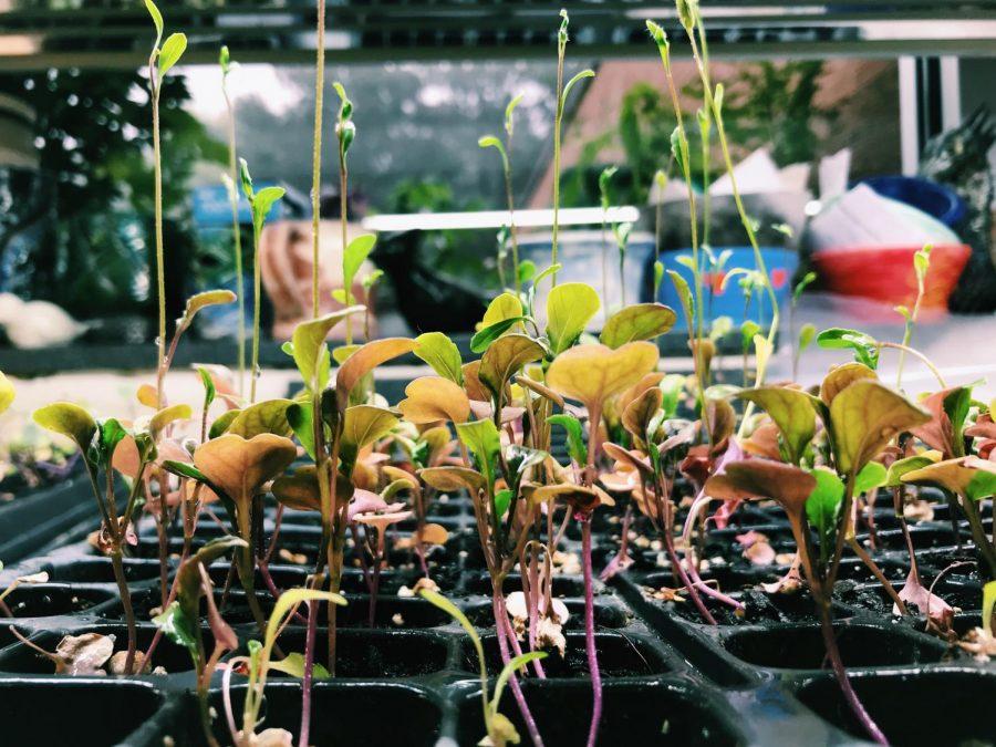 Greenhouse Week 5 (Oct 1-5)