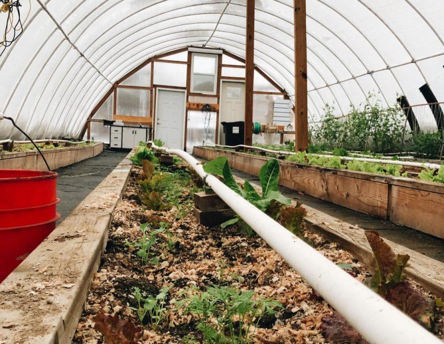 Greenhouse+Week+11+%28Nov+12-16%29