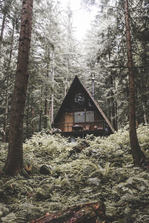 A house residing in the forest