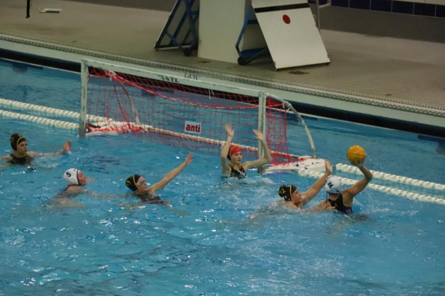 Water polo picks up win against Grand Haven on Senior Night, loses to Rockford soon after