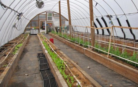Greenhouse Blog 5- Water and watersheds