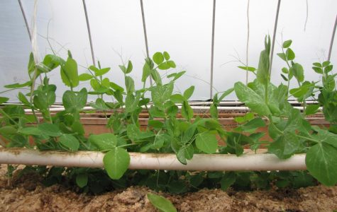 Greenhouse Blog 3- Supplying your garden with nutrients