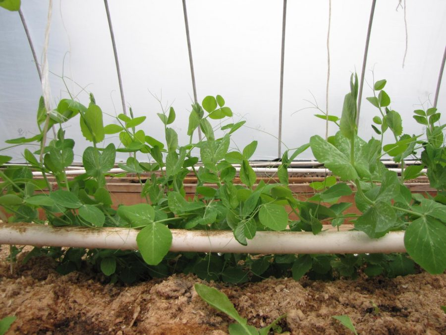 Greenhouse+Blog+3-+Supplying+your+garden+with+nutrients