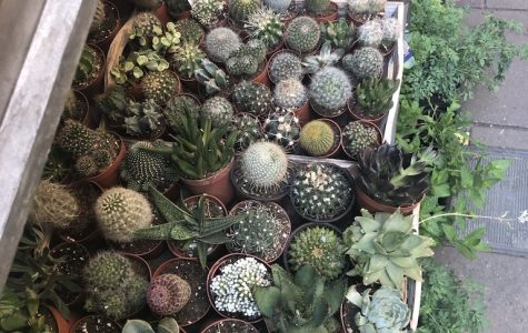 A photo of an eclectic mix of succulents and plants on a Barcelona street.