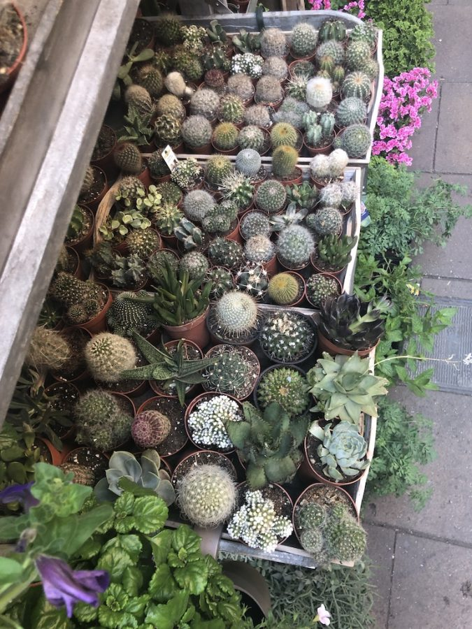 A+photo+of+an+eclectic+mix+of+succulents+and+plants+on+a+Barcelona+street.