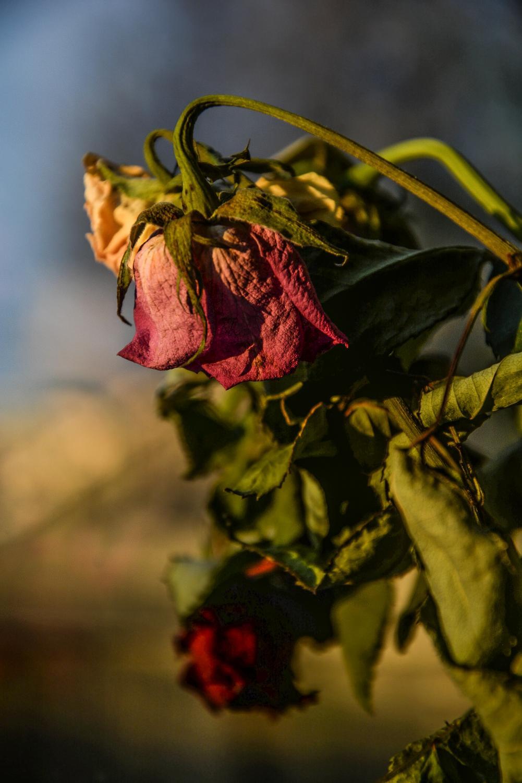 A wilting flower.