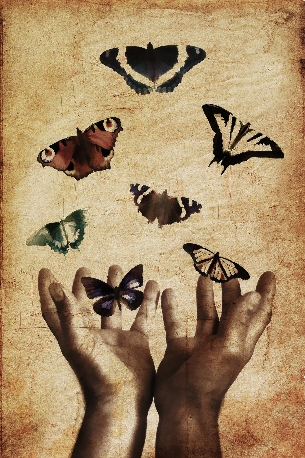 A drawing of a set of hands freeing vibrant butterflies back into the air to continue on with life.