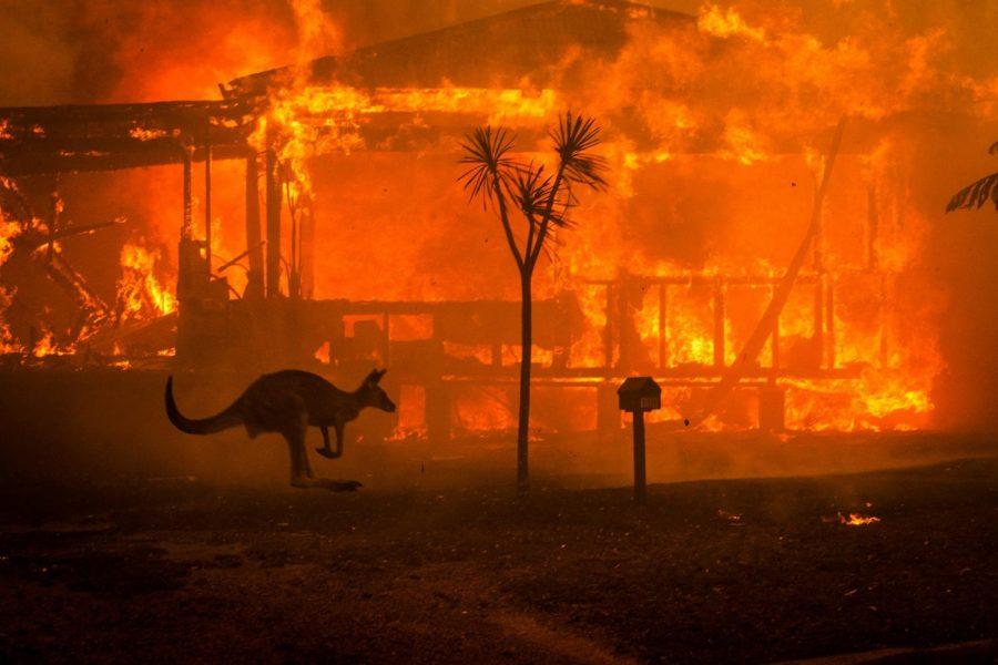 Kangaroo+running+past+fire.