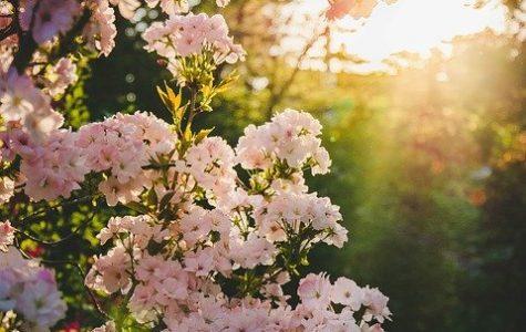 The garden she loved