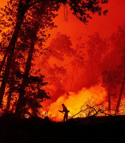 A firefighter battling flames in a California forest, the landscape is destroyed from the 2020 wildfire season.