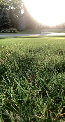 The green, growing grass that greets me every morning.