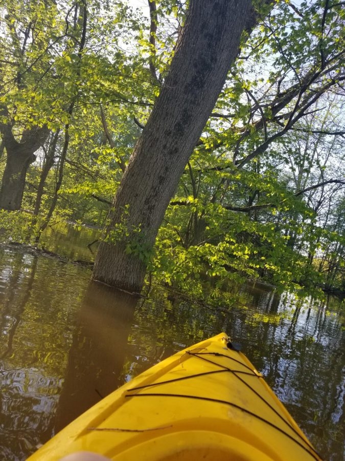 A picture of my kayak in the flooded woods behind my house