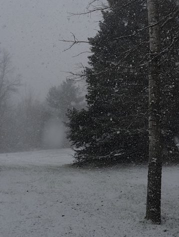 A dark and somewhat unsettling picture of a pine tree during a snowfall.