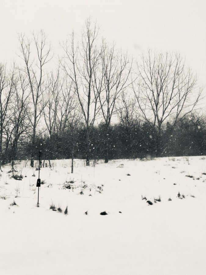 The+pure+white+snow+blanketing+the+ground