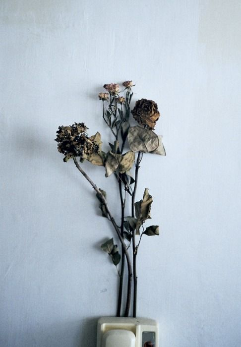 the dead flowers that had me holding on to the past