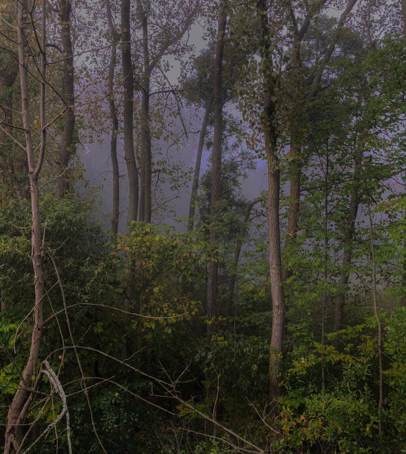 A+foggy%2C+Monday+morning+picture+I+captured+for+a+project+in+the+seventh+grade.+