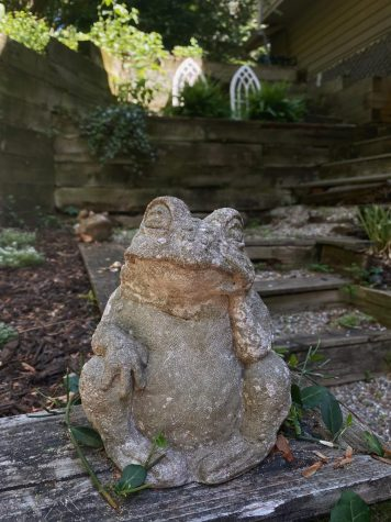 A frog statue that has rested on my back patio for as long as I can remember.