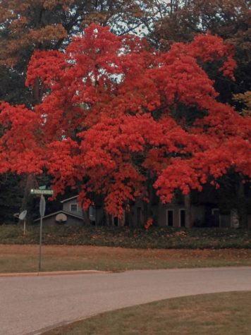 This is a tree that stands in my front yard. Simply gazing at the vivacious hues of red brings a wave of tranquility over me.