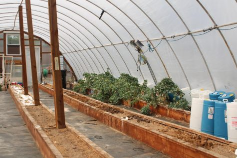 A peak inside the greenhouse, where students are currently growing kale.